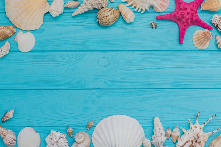 Seashells on Blue Timber